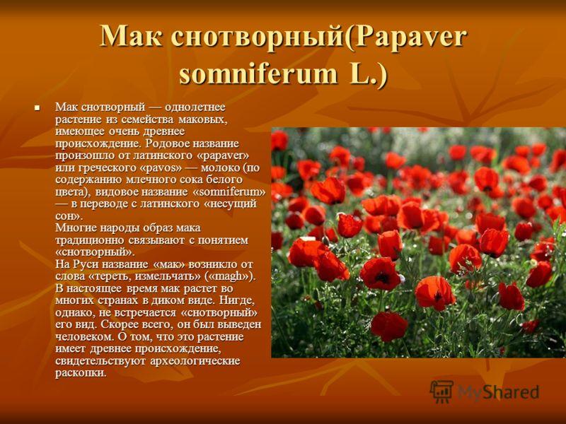 Мак снотворный(Papaver somniferum L.) Мак снотворный однолетнее растение из семейства маковых, имеющее очень древнее происхождение. Родовое название произошло от латинского «papaver» или греческого «pavos» молоко (по содержанию млечного сока белого ц