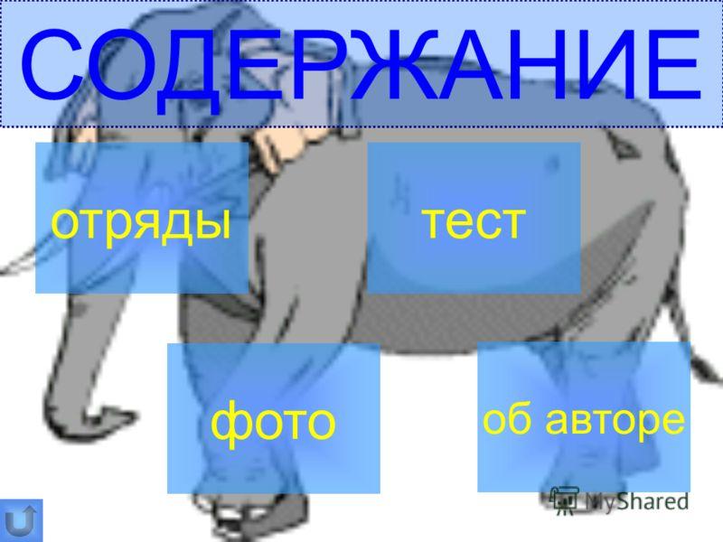 СОДЕРЖАНИЕ отряды фото тест об авторе