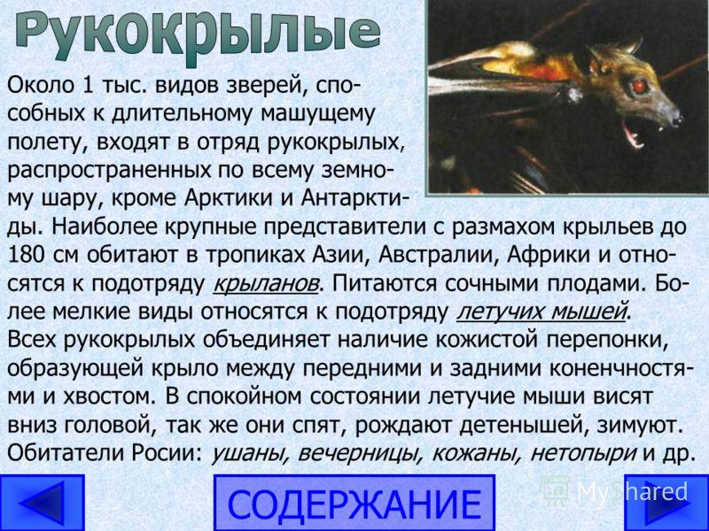 СОДЕРЖАНИЕ Около 1 тыс. видов зверей, спо- собных к длительному машущему полету, входят в отряд рукокрылых, распространенных по всему земно- му шару, кроме Арктики и Антаркти- ды. Наиболее крупные представители с размахом крыльев до 180 см обитают в
