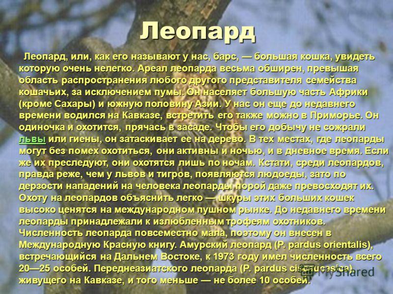 Лев Лев Еще в VIIIX веках львы водились даже на юге Европы, в частности на Кавказе, позже ареал их проживания неуклонно сокращался. Теперь эту красивую кошку можно встретить только в Центральной Африке, а затем, в очень небольшом числе, в индийском ш