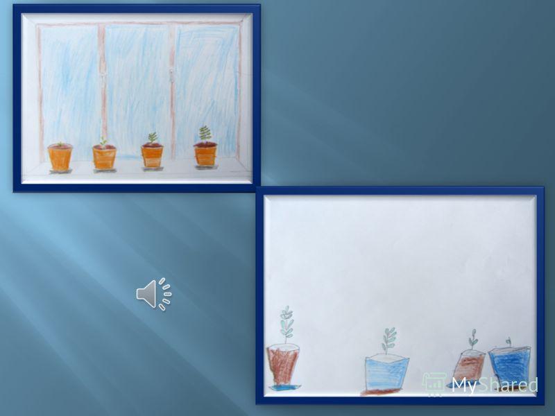 Условия произрастания гороха и фасоли: 1.Растения светолюбивые; 2.Растения теплолюбивые; 3.Время посадки – конец марта апрель; 4.Растения требуют специальной подготовки почвы.