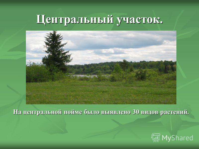 Центральный участок. На центральной пойме было выявлено 30 видов растений.