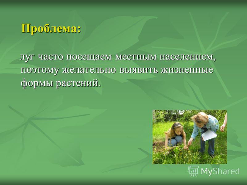 Проблема: Проблема: луг часто посещаем местным населением, поэтому желательно выявить жизненные формы растений. луг часто посещаем местным населением, поэтому желательно выявить жизненные формы растений.