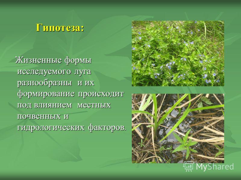 Гипотеза: Гипотеза: Жизненные формы исследуемого луга разнообразны и их формирование происходит под влиянием местных почвенных и гидрологических факторов. Жизненные формы исследуемого луга разнообразны и их формирование происходит под влиянием местны