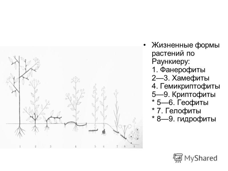 Жизненные формы растений по Раункиеру: 1. Фанерофиты 23. Хамефиты 4. Гемикриптофиты 59. Криптофиты * 56. Геофиты * 7. Гелофиты * 89. гидрофиты