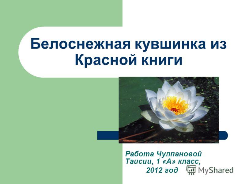 Белоснежная кувшинка из Красной книги Работа Чулпановой Таисии, 1 «А» класс, 2012 год