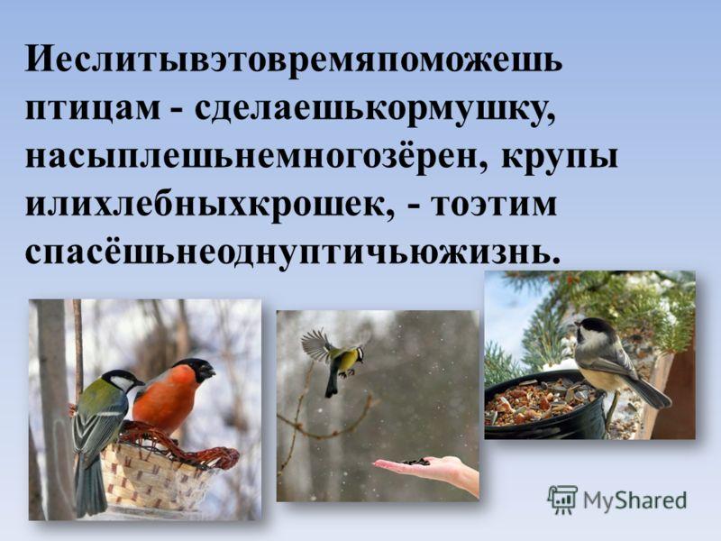 Иеслитывэтовремяпоможешь птицам - сделаешькормушку, насыплешьнемногозёрен, крупы илихлебныхкрошек, - тоэтим спасёшьнеоднуптичьюжизнь.