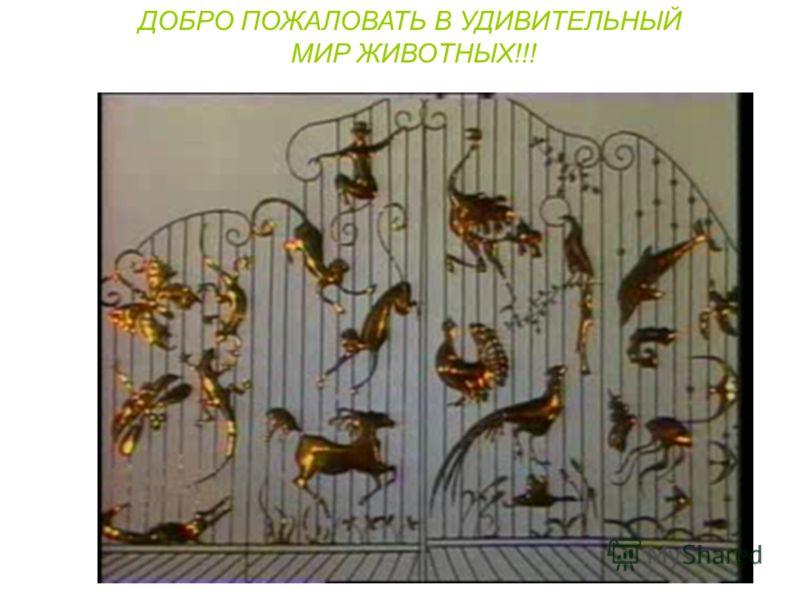 ДОБРО ПОЖАЛОВАТЬ В УДИВИТЕЛЬНЫЙ МИР ЖИВОТНЫХ!!!