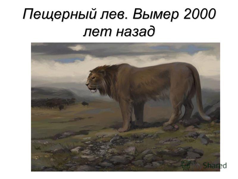 Пещерный лев. Вымер 2000 лет назад