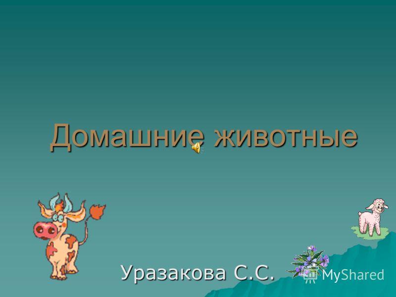 Домашние животные Уразакова С.С.
