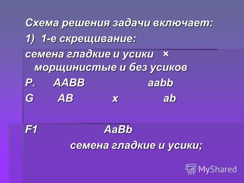 Схема решения задачи включает: 1) 1-е скрещивание: семена гладкие и усики × морщинистые и без усиков Р. ААBВ ааbb G АB х аb F1 АаBb семена гладкие и усики; семена гладкие и усики;