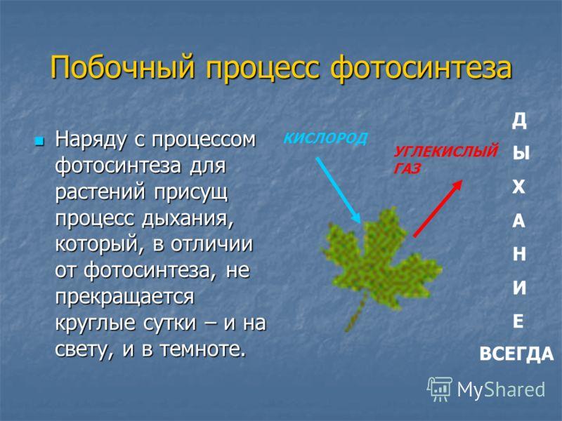 Побочный процесс фотосинтеза Наряду с процессом фотосинтеза для растений присущ процесс дыхания, который, в отличии от фотосинтеза, не прекращается круглые сутки – и на свету, и в темноте. Наряду с процессом фотосинтеза для растений присущ процесс ды