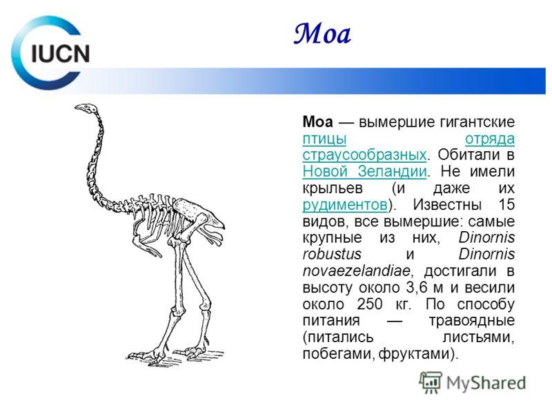 Моа вымершие гигантские птицы отряда страусообразных. Обитали в Новой Зеландии. Не имели крыльев (и даже их рудиментов). Известны 15 видов, все вымершие: самые крупные из них, Dinornis robustus и Dinornis novaezelandiae, достигали в высоту около 3,6