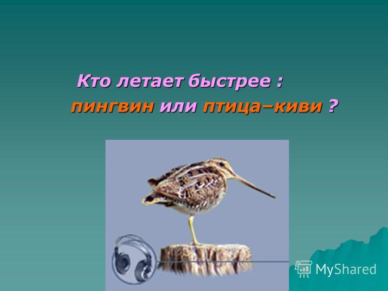 Кто летает быстрее : Кто летает быстрее : пингвин или птица–киви ? пингвин или птица–киви ?