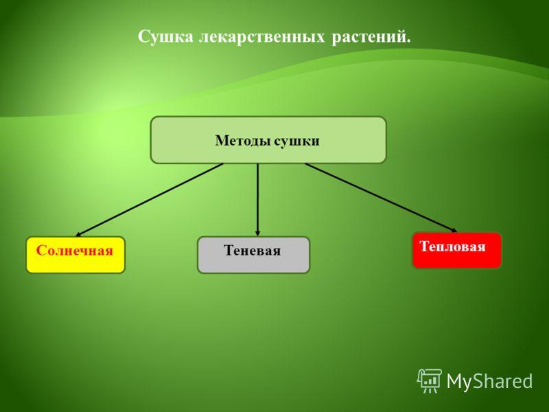 Сушка лекарственных растений. Методы сушки Солнечная Теневая Тепловая