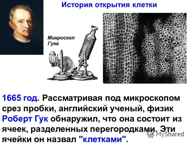 1665 год. Рассматривая под микроскопом срез пробки, английский ученый, физик Роберт Гук обнаружил, что она состоит из ячеек, разделенных перегородками. Эти ячейки он назвал клетками. История открытия клетки