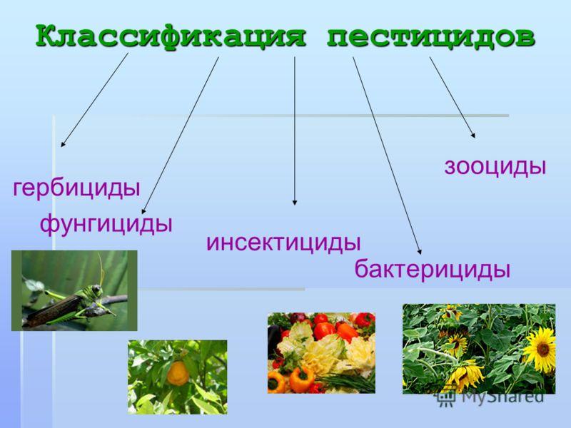 Классификация пестицидов гербициды фунгициды инсектициды зооциды бактерициды