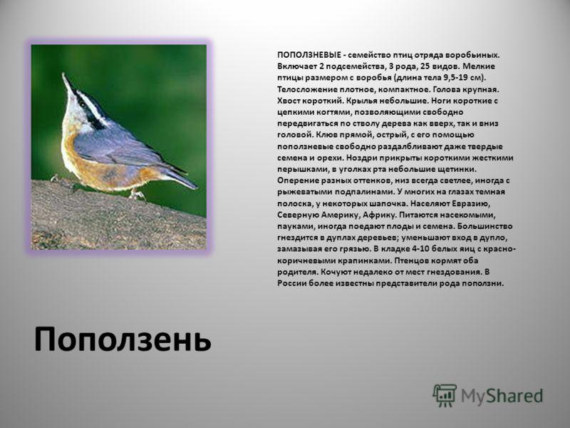 Поползень ПОПОЛЗНЕВЫЕ - семейство птиц отряда воробьиных. Включает 2 подсемейства, 3 рода, 25 видов. Мелкие птицы размером с воробья (длина тела 9,5-19 см). Телосложение плотное, компактное. Голова крупная. Хвост короткий. Крылья небольшие. Ноги коро