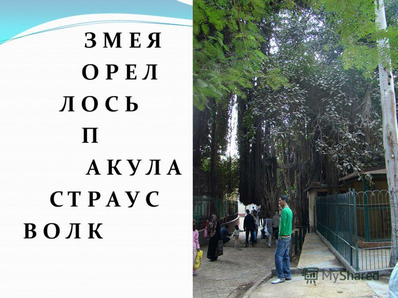Учитель МОУ начальной школы- детского сада «Росинка» Бормотина С.М.