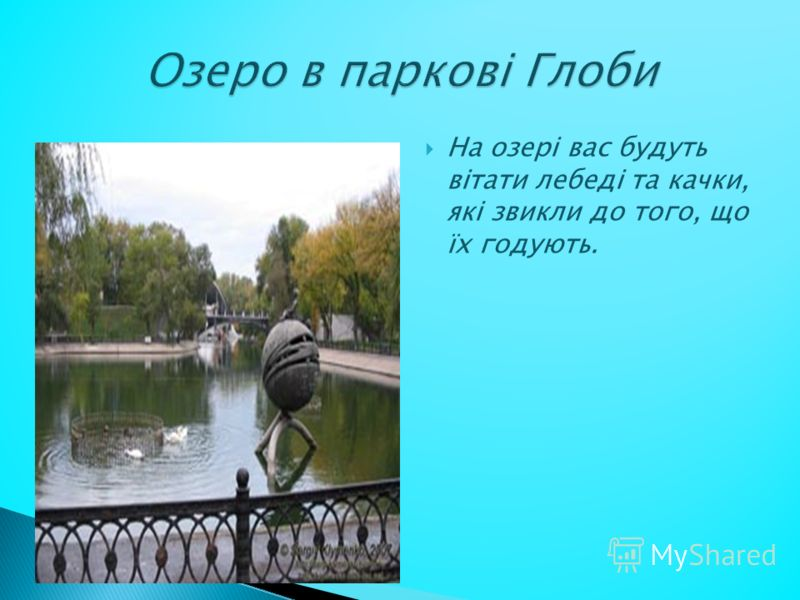 На озері вас будуть вітати лебеді та качки, які звикли до того, що їх годують.