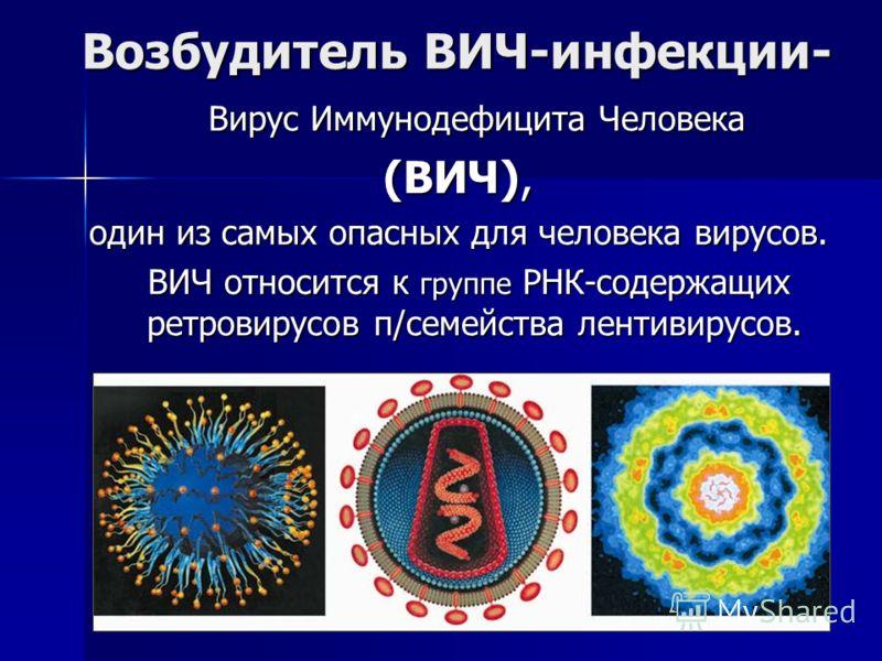 Возбудитель ВИЧ-инфекции- Вирус Иммунодефицита Человека Вирус Иммунодефицита Человека (ВИЧ), один из самых опасных для человека вирусов. ВИЧ относится к группе РНК-содержащих ретровирусов п/семейства лентивирусов. ВИЧ относится к группе РНК-содержащи