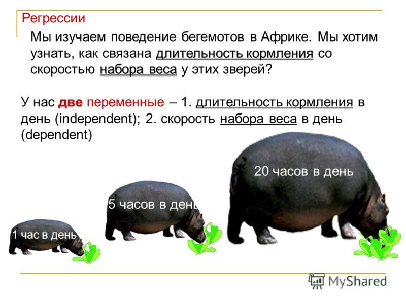 длительность кормления набора веса Мы изучаем поведение бегемотов в Африке. Мы хотим узнать, как связана длительность кормления со скоростью набора веса у этих зверей? две У нас две переменные – 1. длительность кормления в день (independent); 2. скор