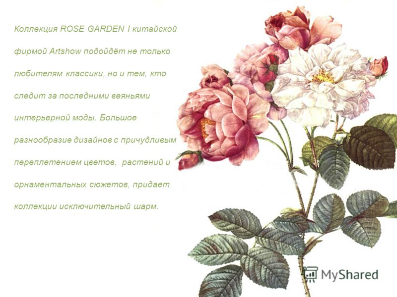 Коллекция ROSE GARDEN I китайской фирмой Artshow подойдёт не только любителям классики, но и тем, кто следит за последними веяньями интерьерной моды. Большое разнообразие дизайнов с причудливым переплетением цветов, растений и орнаментальных сюжетов,