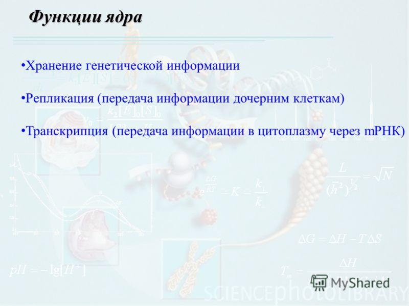 Функции ядра Хранение генетической информации Репликация (передача информации дочерним клеткам) Транскрипция (передача информации в цитоплазму через mРНК)