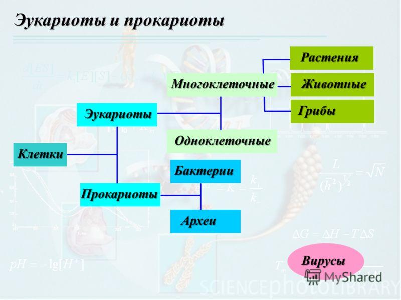 Эукариоты и прокариоты Клетки Эукариоты Прокариоты Многоклеточные Бактерии Археи Вирусы ОдноклеточныеРастенияЖивотные Грибы