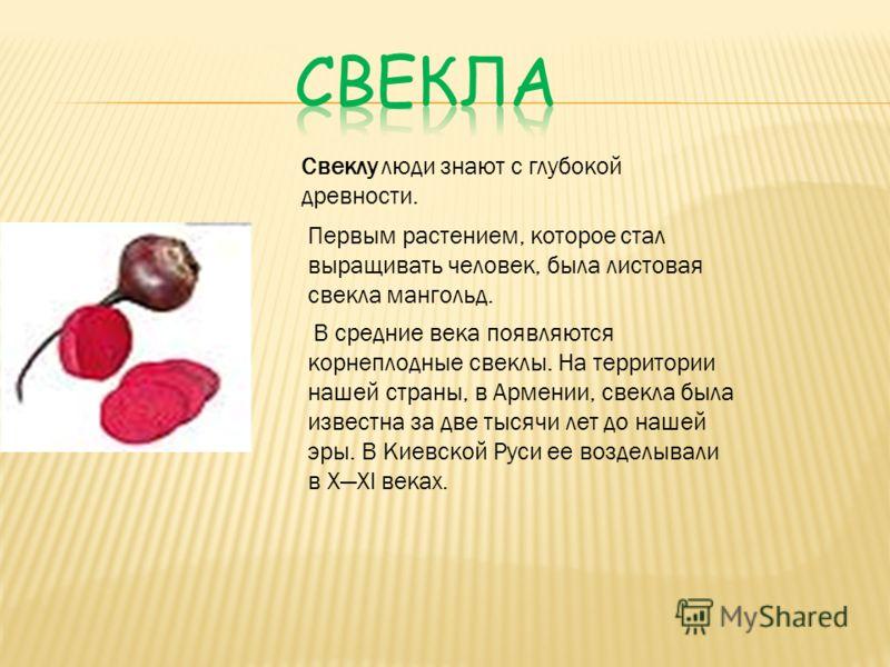 Свеклу люди знают с глубокой древности. Первым растением, которое стал выращивать человек, была листовая свекла мангольд. В средние века появляются корнеплодные свеклы. На территории нашей страны, в Армении, свекла была известна за две тысячи лет до