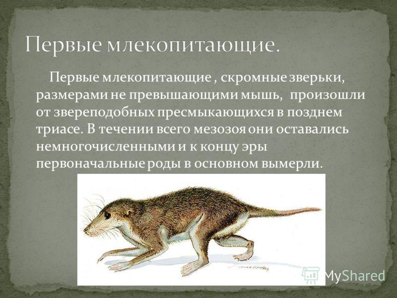 Первые млекопитающие, скромные зверьки, размерами не превышающими мышь, произошли от звереподобных пресмыкающихся в позднем триасе. В течении всего мезозоя они оставались немногочисленными и к концу эры первоначальные роды в основном вымерли.
