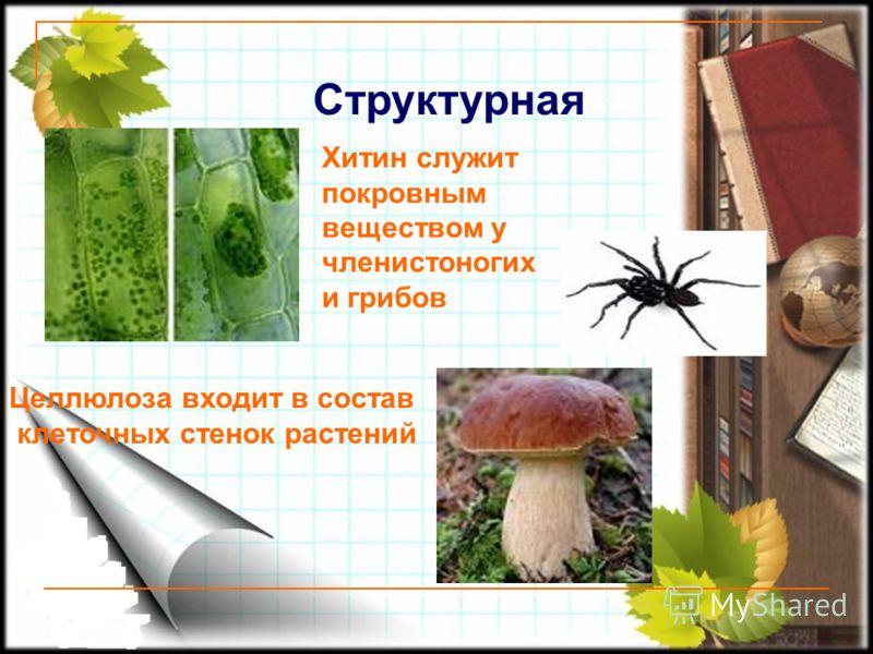 Структурная Целлюлоза входит в состав клеточных стенок растений Хитин служит покровным веществом у членистоногих и грибов