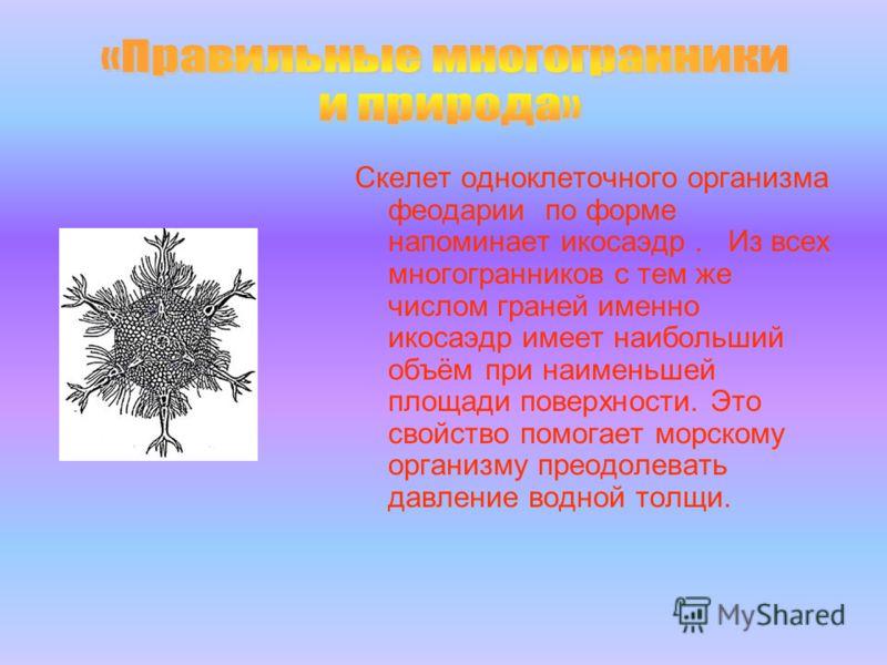 Скелет одноклеточного организма феодарии по форме напоминает икосаэдр. Из всех многогранников с тем же числом граней именно икосаэдр имеет наибольший объём при наименьшей площади поверхности. Это свойство помогает морскому организму преодолевать давл