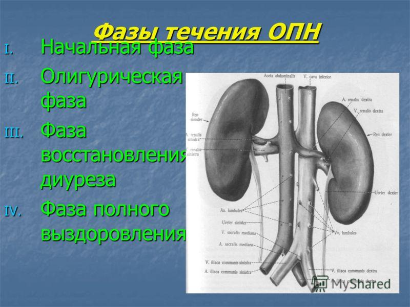 Фазы течения ОПН I. Начальная фаза II. Олигурическая фаза III. Фаза восстановления диуреза IV. Фаза полного выздоровления
