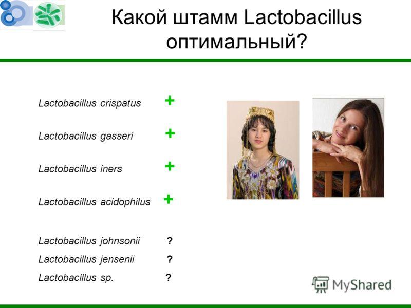 Lactobacillus crispatus + Lactobacillus gasseri + Lactobacillus iners + Lactobacillus acidophilus + Lactobacillus johnsonii ? Lactobacillus jensenii ? Lactobacillus sp. ? Какой штамм Lactobacillus оптимальный?