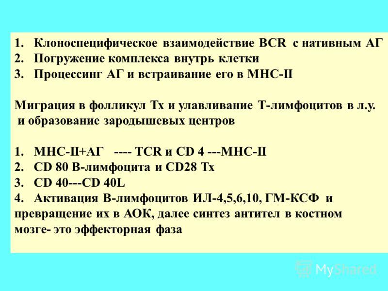1.Клоноспецифическое взаимодействие BCR с нативным АГ 2.Погружение комплекса внутрь клетки 3.Процессинг АГ и встраивание его в МНС-II Миграция в фолликул Тх и улавливание Т-лимфоцитов в л.у. и образование зародышевых центров 1.MHC-II+АГ ---- TCR и CD