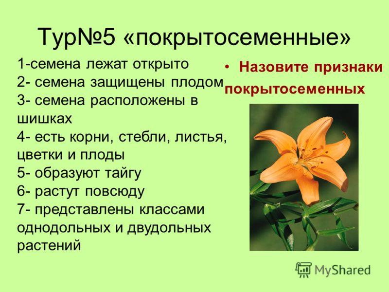 Тур5 «покрытосеменные» Назовите признаки покрытосеменных 1-семена лежат открыто 2- семена защищены плодом 3- семена расположены в шишках 4- есть корни, стебли, листья, цветки и плоды 5- образуют тайгу 6- растут повсюду 7- представлены классами однодо