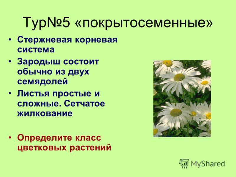 Тур5 «покрытосеменные» Стержневая корневая система Зародыш состоит обычно из двух семядолей Листья простые и сложные. Сетчатое жилкование Определите класс цветковых растений
