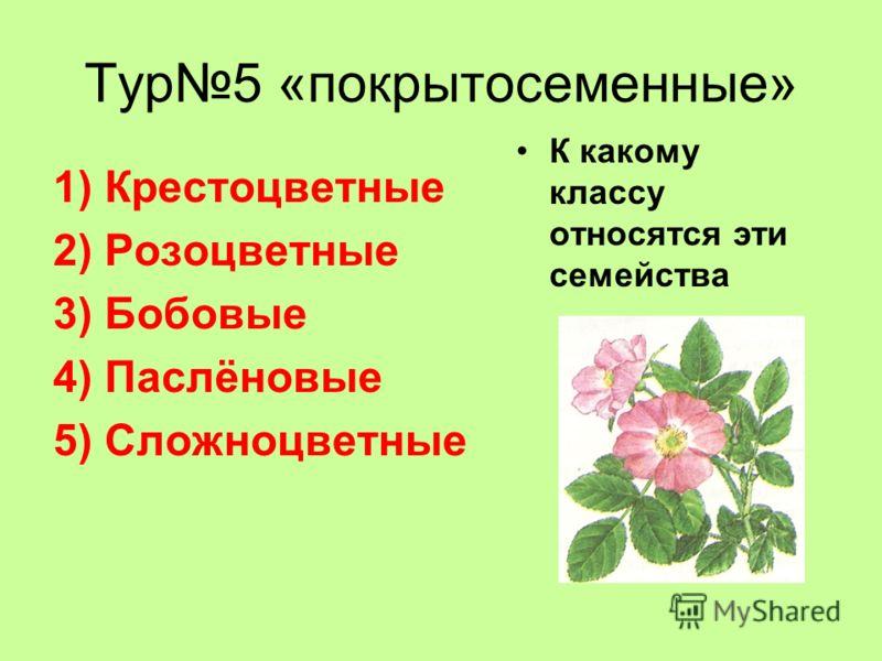 Тур5 «покрытосеменные» 1)Крестоцветные 2)Розоцветные 3)Бобовые 4)Паслёновые 5)Сложноцветные К какому классу относятся эти семейства