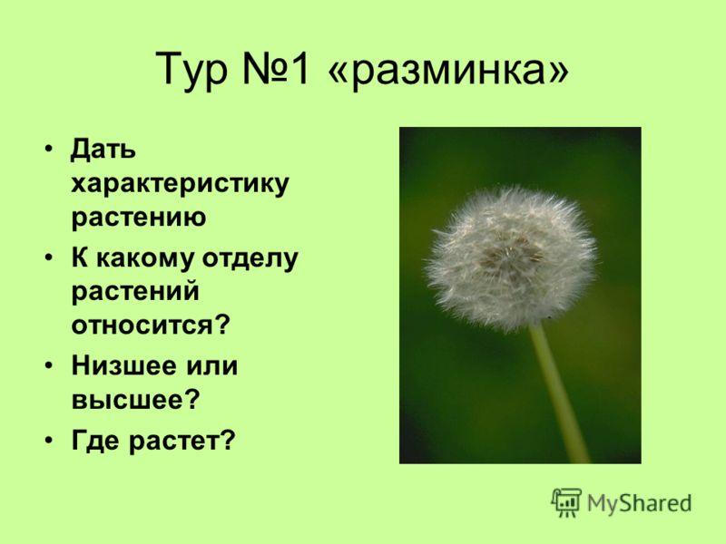 Тур 1 «разминка» Дать характеристику растению К какому отделу растений относится? Низшее или высшее? Где растет?