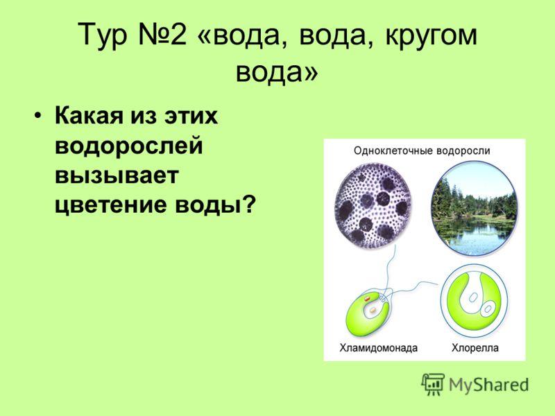 Тур 2 «вода, вода, кругом вода» Какая из этих водорослей вызывает цветение воды?