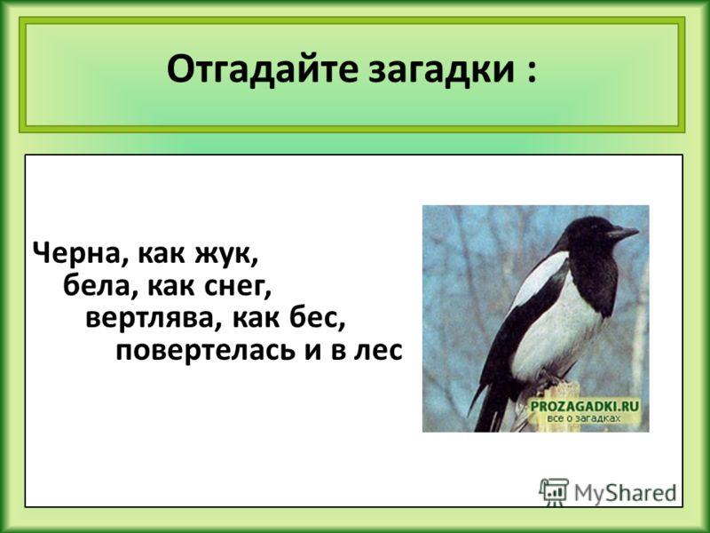 Отгадайте загадки : Черна, как жук, бела, как снег, вертлява, как бес, повертелась и в лес