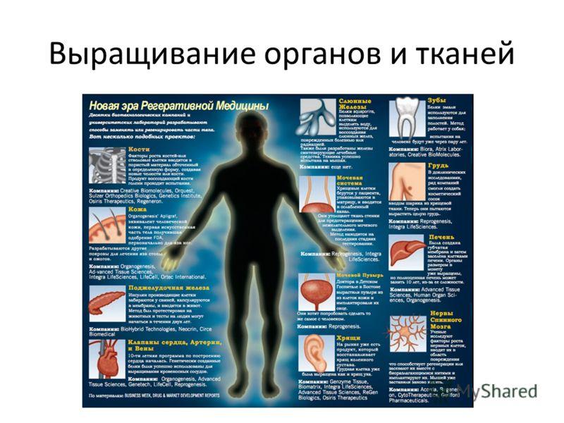 Выращивание органов и тканей