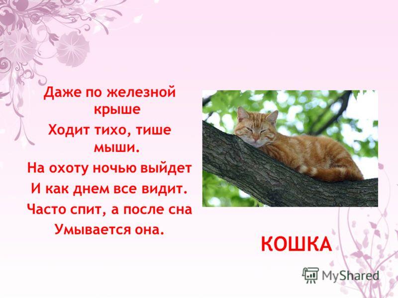 Даже по железной крыше Ходит тихо, тише мыши. На охоту ночью выйдет И как днем все видит. Часто спит, а после сна Умывается она. КОШКА