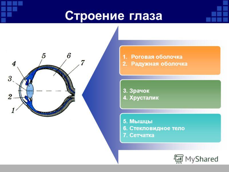 Company Logo Строение глаза 1.Роговая оболочка 2.Радужная оболочка 3. Зрачок 4. Хрусталик 5. Мышцы 6. Стекловидное тело 7. Сетчатка