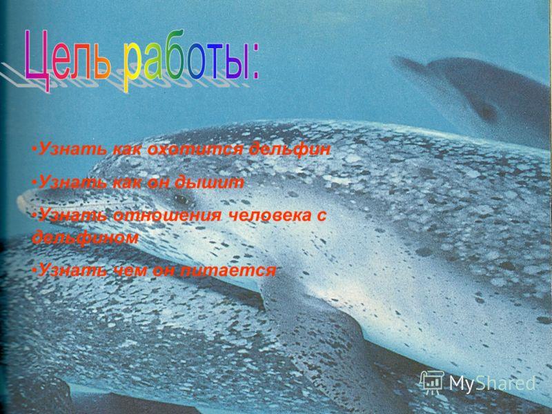 Узнать как охотится дельфин Узнать как он дышит Узнать отношения человека с дельфином Узнать чем он питается