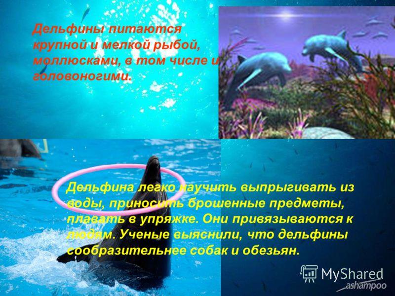 Дельфина легко научить выпрыгивать из воды, приносить брошенные предметы, плавать в упряжке. Они привязываются к людям. Ученые выяснили, что дельфины сообразительнее собак и обезьян. Дельфины питаются крупной и мелкой рыбой, моллюсками, в том числе и