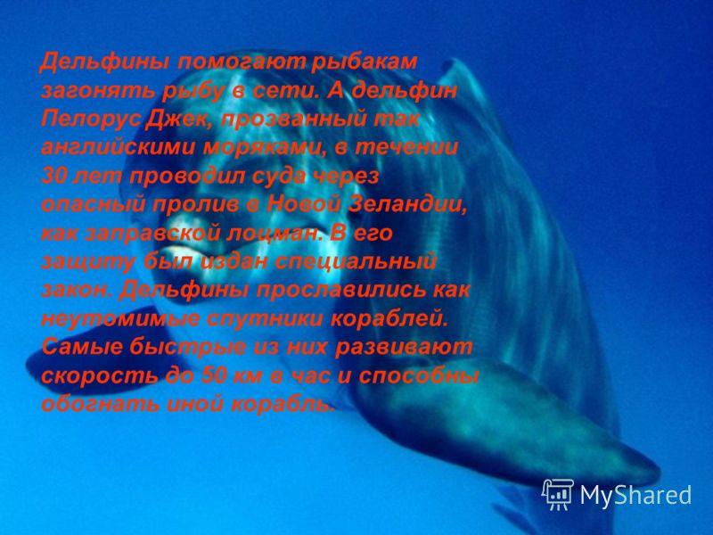 Дельфины помогают рыбакам загонять рыбу в сети. А дельфин Пелорус Джек, прозванный так английскими моряками, в течении 30 лет проводил суда через опасный пролив в Новой Зеландии, как заправской лоцман. В его защиту был издан специальный закон. Дельфи