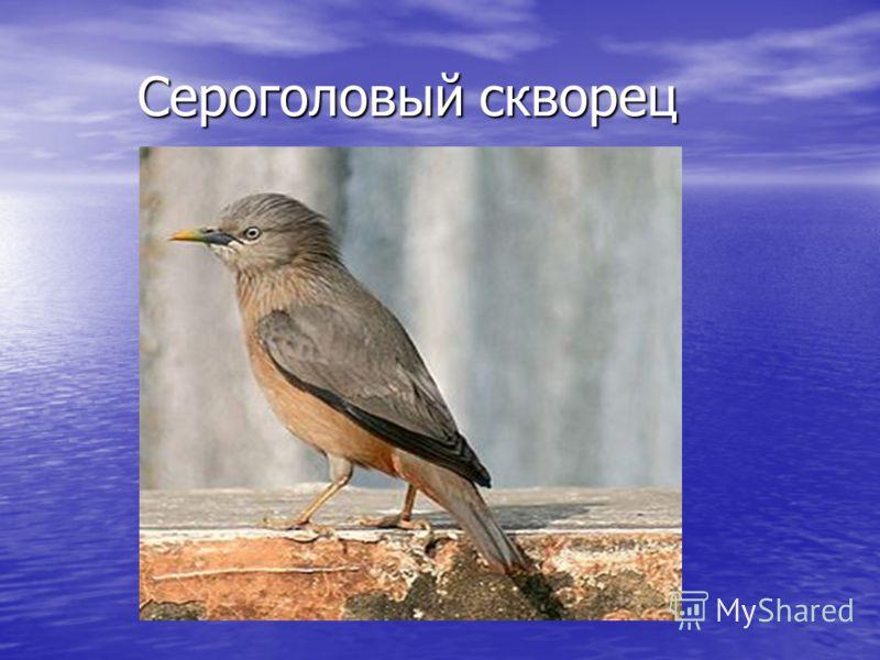 Животные тип хордовые класс птицы