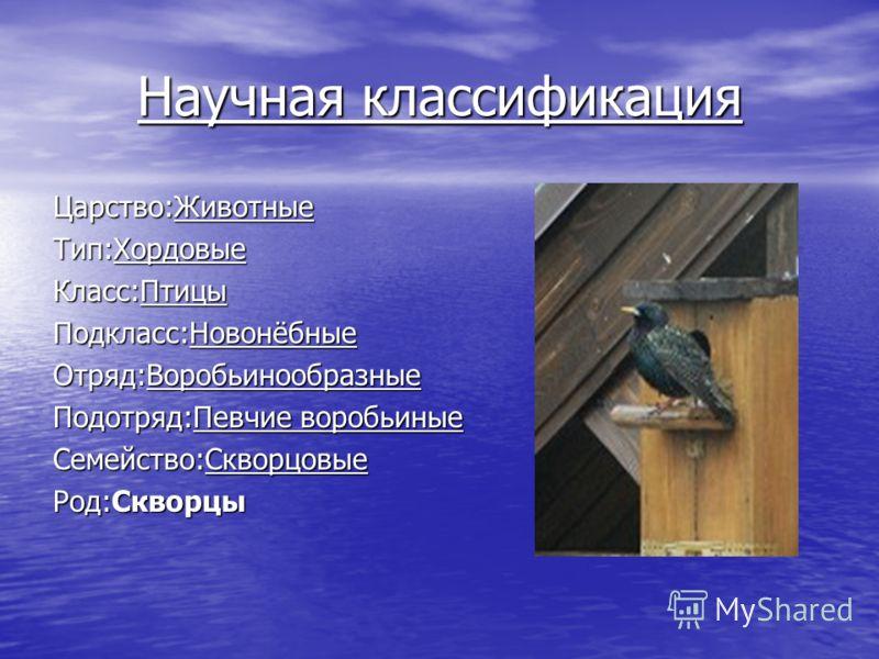 Научная классификация Царство:Животные Тип:Хордовые Класс:Птицы Подкласс:Новонёбные Отряд:Воробьинообразные Подотряд:Певчие воробьиные Семейство:Скворцовые Род:Скворцы